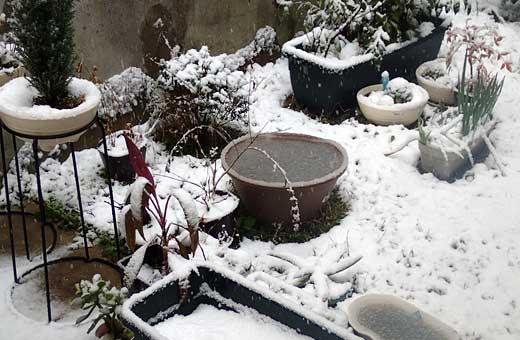img_snow.jpg